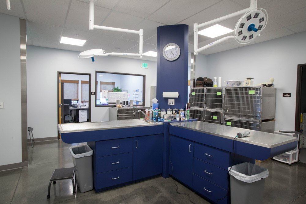 Griffin-Construction-Columbia-Veterinary-Hospital-4